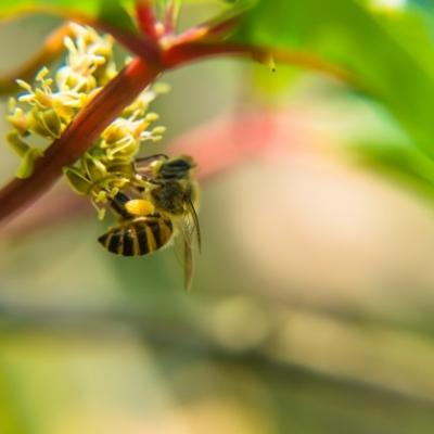 A méhek szerepe az immunrendszer erősítésében!